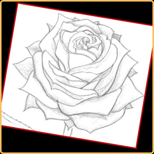 Dibujando Rosas a Lapiz